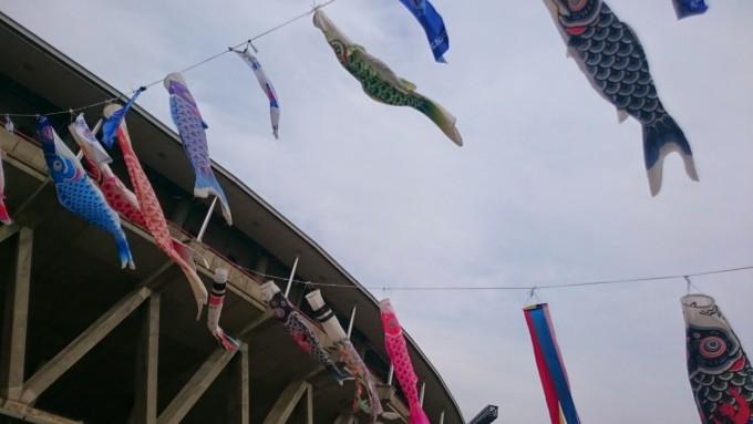 勝利を祝う鯉のぼり
